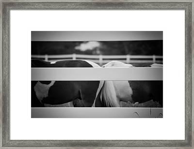 Pony Farm 2011 Framed Print