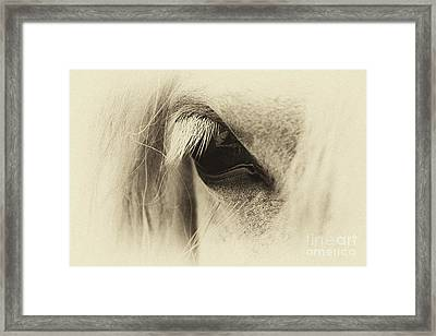 Pony In Sepia  Framed Print by Tim Gainey