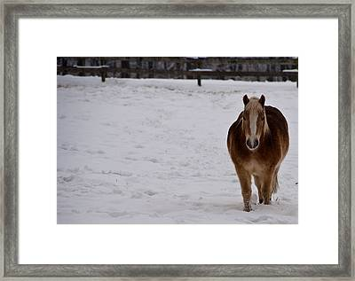 Pony In Snow Framed Print by Nickaleen Neff