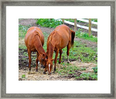 Framed Print featuring the photograph Pony Love by Jay Nodianos