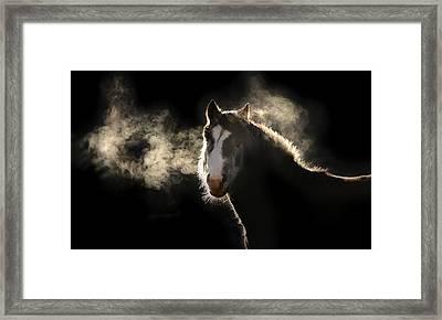 Pony Framed Print by Marc Huebner
