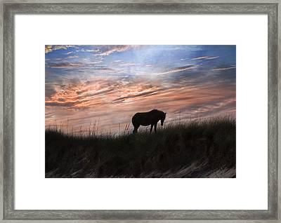 Pony On The Dunes Framed Print by Betsy Knapp
