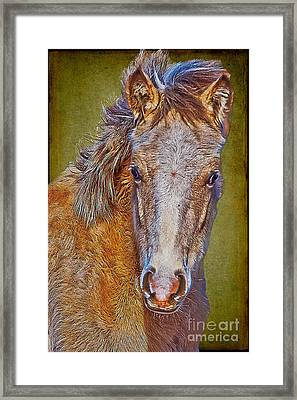 Pony Portrait  Framed Print