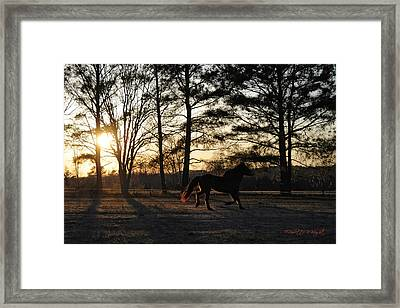 Pony's Evening Pasture Trot Framed Print by Paulette B Wright