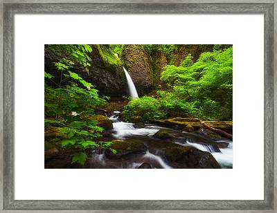 Ponytail Light Framed Print by Darren  White