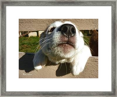 Pooch Smooch Framed Print