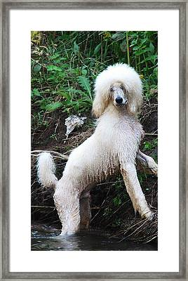 Poodle In The Forest Framed Print