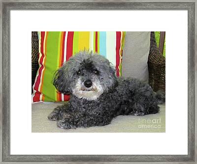Poodle Love Framed Print