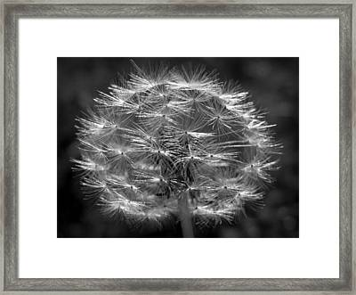 Framed Print featuring the photograph Poof - Black And White by Joseph Skompski