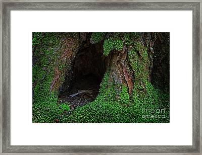 Pooh Corner Framed Print by John Stephens
