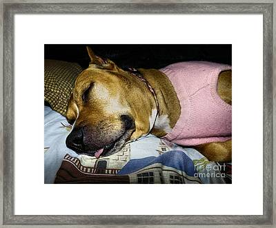 Pooped Pup Framed Print by Robyn King