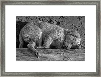 Pooped Puppy Bw Framed Print by Steve Harrington