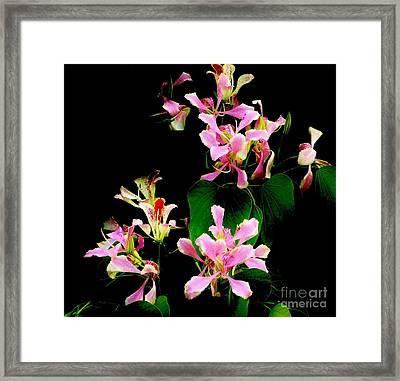 Poor Mans Orchid Framed Print