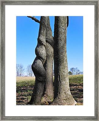 Framed Print featuring the photograph Poor Twisted Tree by Nick Kirby