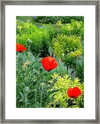 Pop Goes The Garden Framed Print