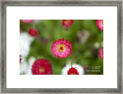 Pop Of Pink Framed Print by Sarah Crites