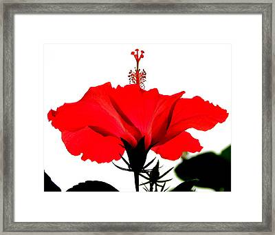 Pop Of Red Framed Print by Ramona Johnston
