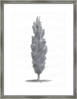 Poplar Drawing Number One Framed Print by Alan Daysh