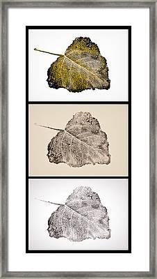 Poplar Leaf 3xt Vertical-blkborder Framed Print by Greg Jackson