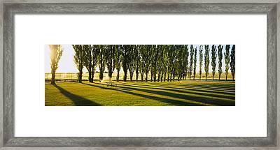 Poplar Trees Near A Wheat Field, Twin Framed Print