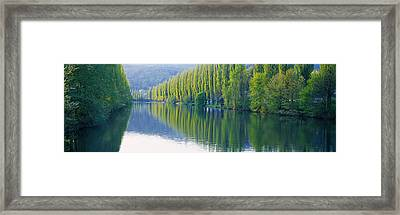 Poplar Trees On River Aare, Near Canton Framed Print by Panoramic Images