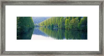 Poplar Trees On River Aare, Near Canton Framed Print