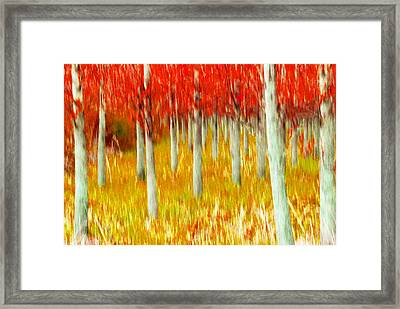 Poplars Framed Print by Michele Wright