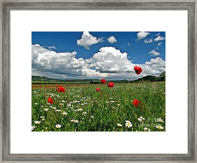 Poppied Landscape Framed Print