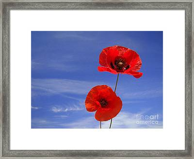 Poppies 02 Framed Print by Giorgio Darrigo