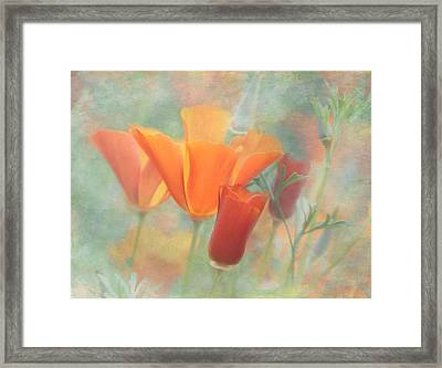 Poppies After Framed Print