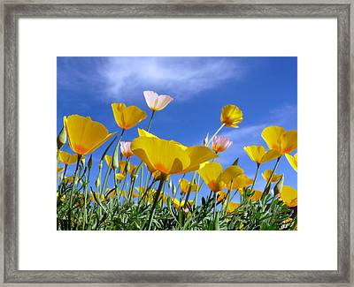 Poppies And Blue Arizona Sky Framed Print