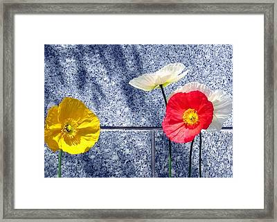 Poppies And Granite Framed Print