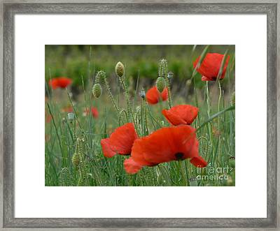 Poppies And Vines Framed Print