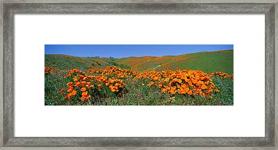 Poppies And Wildflowers, Antelope Framed Print by Panoramic Images