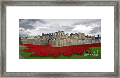 Poppies At The Tower Of London Framed Print by J Biggadike