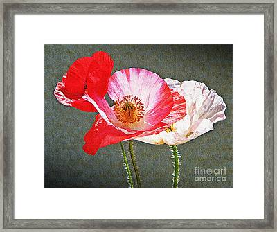 Poppies  Framed Print by Chris Berry