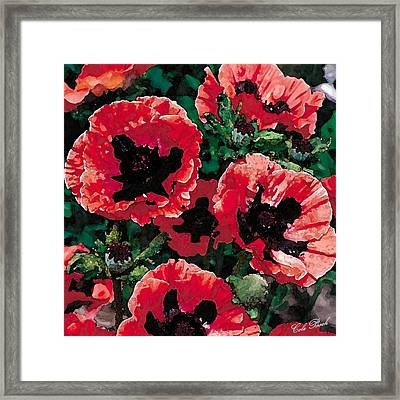 Poppies Framed Print by Cole Black