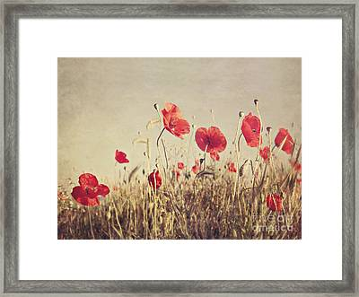 Poppies Framed Print by Diana Kraleva