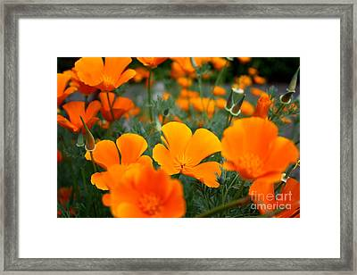 Framed Print featuring the photograph Poppies by Edward R Wisell