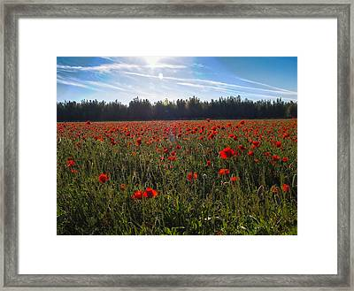 Framed Print featuring the photograph Poppies Field Forever by Meir Ezrachi