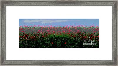 Poppies Field Framed Print
