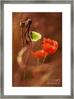 Poppies Impression Framed Print