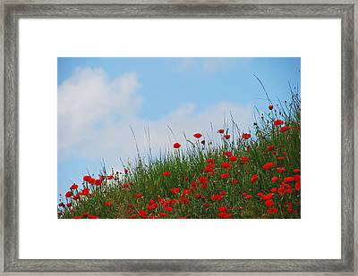 Poppies In A French Landscape Framed Print