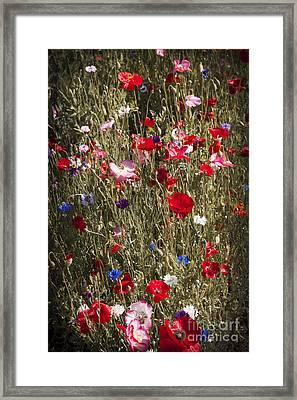 Poppies In Garden Framed Print by Elena Elisseeva