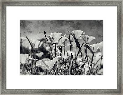 Poppies In Mono Framed Print