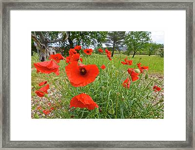 Poppies In Southern France Framed Print by Kike Calvo