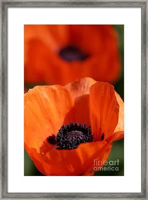 Framed Print featuring the photograph Poppies In Sunlight by Lincoln Rogers