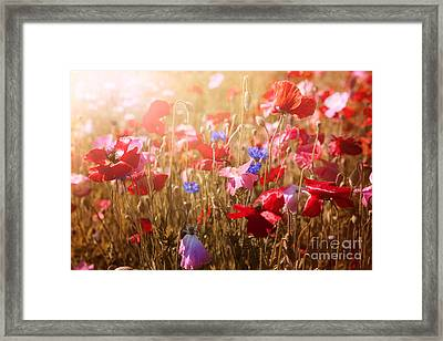 Poppies In Sunshine Framed Print by Elena Elisseeva