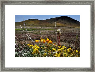 Framed Print featuring the photograph Poppies In The Field Chiracahua Mountains by Diane Lent