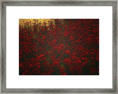 Poppies In The Rain Framed Print